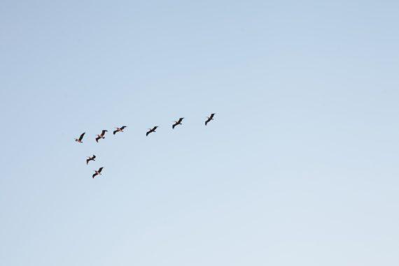 Birdlife Panel